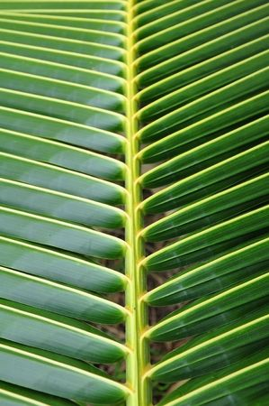Coconut leaf pattern detail photo