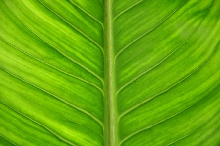 Green leaf as close up