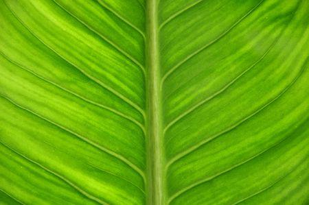 Groen blad als close-up  Stockfoto