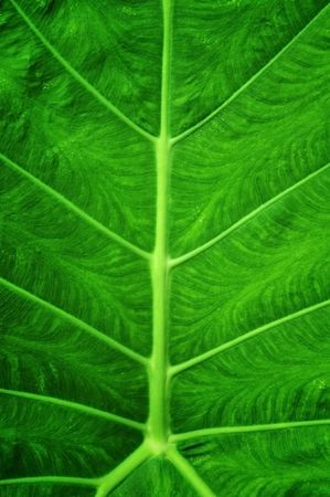 Close up green color leap pattern Stock Photo - 7693110