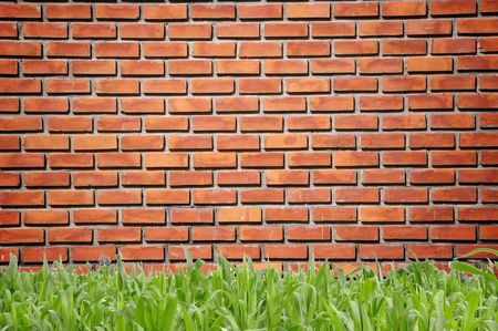 brickwall pattern and grass Stock Photo - 7789187