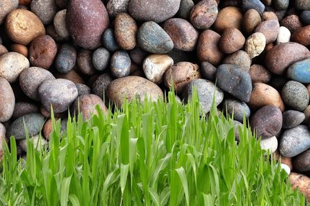 Curve grass shape in front of round stone background photo