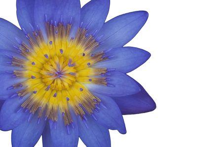 Purple lotus flower as white isolate background Stock Photo - 7992350