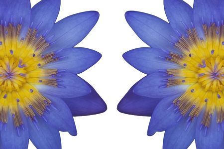 Two lotus flower as white isolate background Stock Photo - 7992357