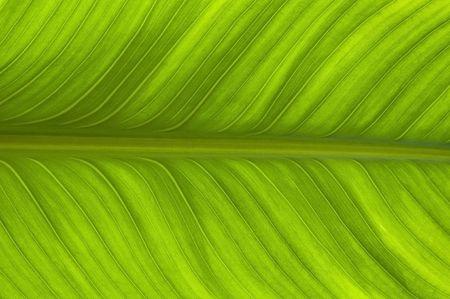 blad textuur achtergrond