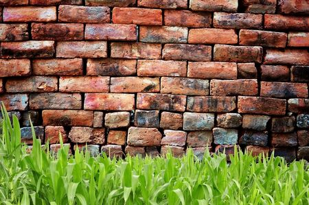 Green grass and old brickwall photo