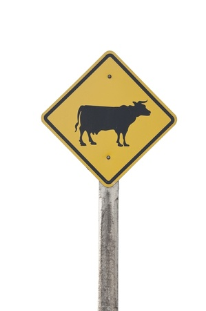 cow traffic sign as white isolate background photo