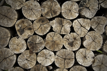 log cross section texture background