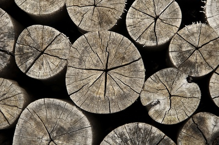 Old wood log cross section background  photo