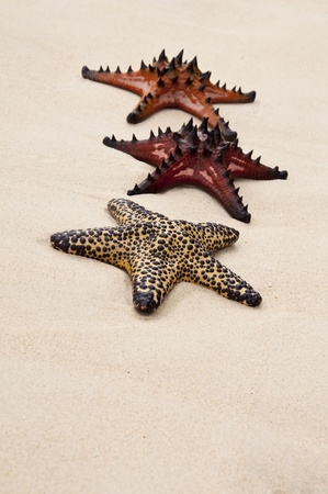 seastar: Seastar in the sand