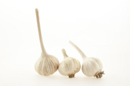 Garlic as white isolate background photo