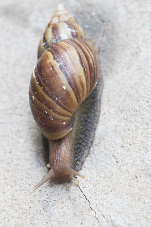 snail as empty background