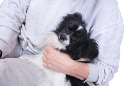 Piccolo cane bianco nero nel braccio di una donna. Archivio Fotografico - 92820521