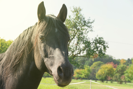 Testa di cavallo in estate Archivio Fotografico - 92934348
