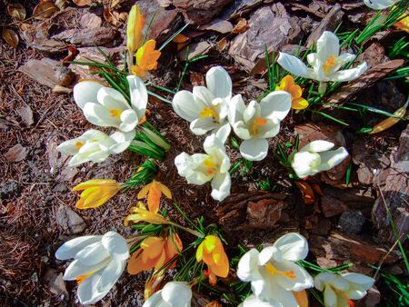 Plants that have already begun to emerge from their winter dormancy