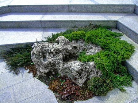 Natural patterns among hardscapes, urban ideas.
