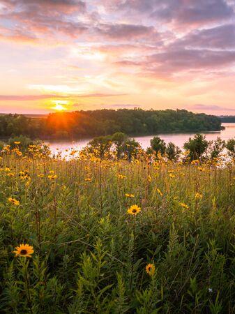 Wildblumen auf einer Wiese über dem See bei Sonnenuntergang Standard-Bild
