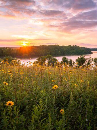 Wildflowers in a meadow over the lake at sunset