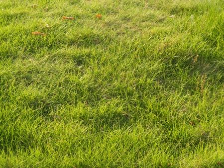 grassland under sunshine under sunshine Stock Photo