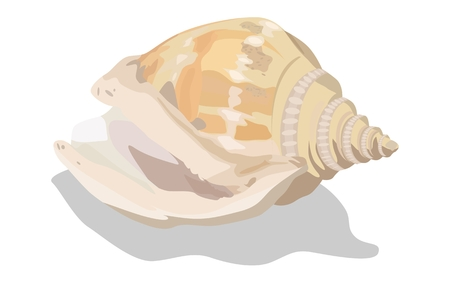 Colorful tropical shell, vector illustration. EPS-10 separated by groups and layers for easy edit.
