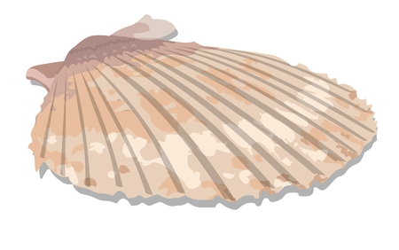 Colorful tropical shell, vector illustration. Separated by groups and layers for easy edit. Çizim