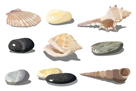 Vector realistic tropical shells and sea pebbles isolated on white background. EPS-10 separated by groups and layers for easy edit. Vettoriali