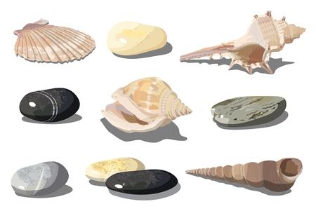 Vector realistische tropische schelpen en zee kiezelstenen geïsoleerd op een witte achtergrond. EPS-10 gescheiden door groepen en lagen voor eenvoudige bewerking. Vector Illustratie
