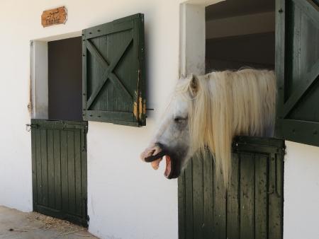 laugher: Laugher Horse