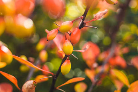 Beautiful fruits on a branch Stock Photo