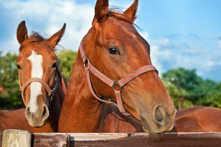 carreras de caballos: Detalle de la cabeza de un caballo sobre fondo de cielo  Foto de archivo
