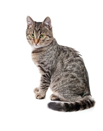 Cute grey cat sitting down Stock Photo - 10190111