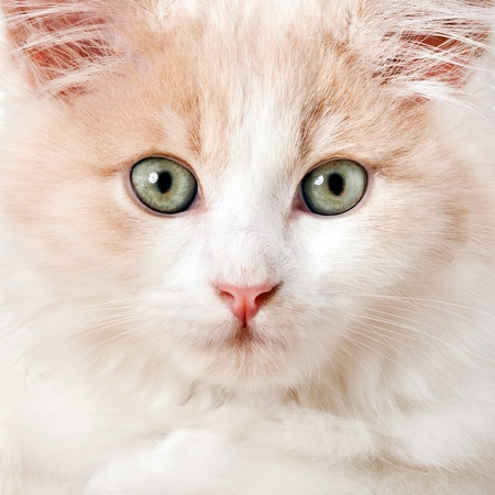 Little cat on a white background photo