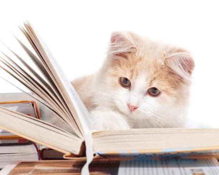 Gatito leer un libro Foto de archivo