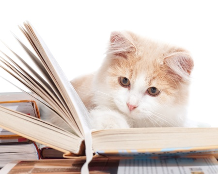cat tail: Little cat read a book