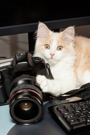 Little cat with a camera photo