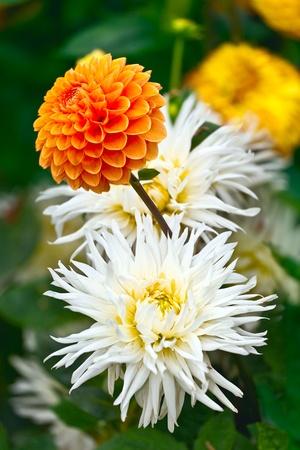 orange rose: Bouquet of Flowers Stock Photo
