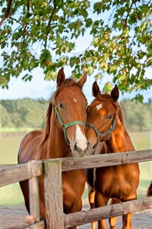 rancho: Detalle de la cabeza de un caballo en el cielo de fondo