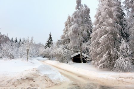 abstruse: White Winter forest in the german Harz Stock Photo