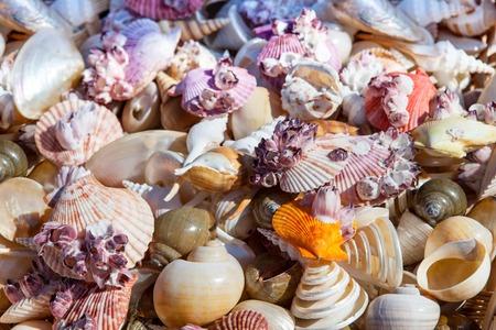 cushion sea star: Starfish and seashells souvenirs for sale at street