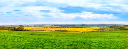 Panorama view of green fields and a Rape plantation