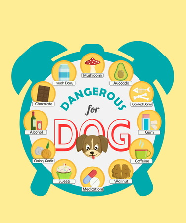 intoxication: Infographic poster about food and snacks that are dangerous for your dog and may cause intoxication. A set of icons including avocado, mushroom, dairy, coffee, etc Illustration