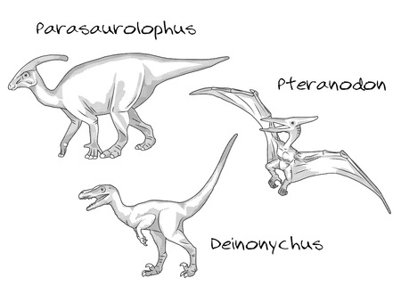A set of thin line engraving style illustrations of various kinds of prehistoric dinosaurs, it includes parasaurolophus, pteranodon, deinonychus. Illustration