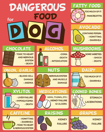 Infographic poster about food and snacks that are dangerous for your dog and may cause intoxication. A set of icons including avocado, mushroom, dairy, coffee, etc Çizim