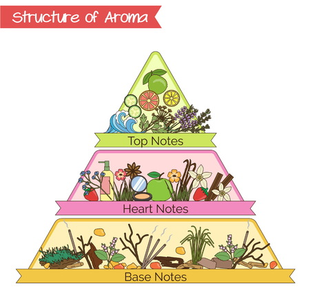 Aromatic structure notes guide for perfume, scent and aroma info graphic.