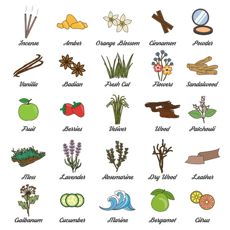 Collection of icons for aromatic plants, herbs and woods for essence oils production.