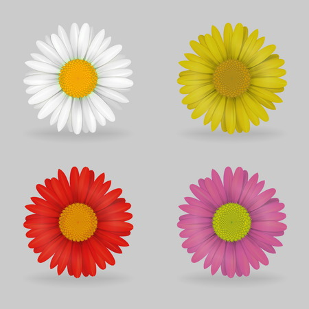 daisyflower: A collection of vibrant multi color lovely daisy chammomile flowers. Realistic close-up look, detailed petals, 4 colour variations.