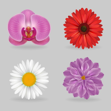 daisyflower: A collection of vibrant multi color lovely flowers, chammomile, gerbera, chrysantemum, orchid. Realistic close-up look, detailed petals, 4 variations.