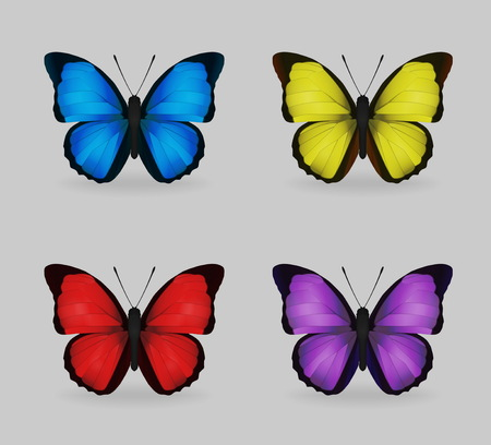 multy: A collection of vibrant multy color insect blue morpho butterflies. Realistic close-up look, delicate wing pattern, 4 colour variations.