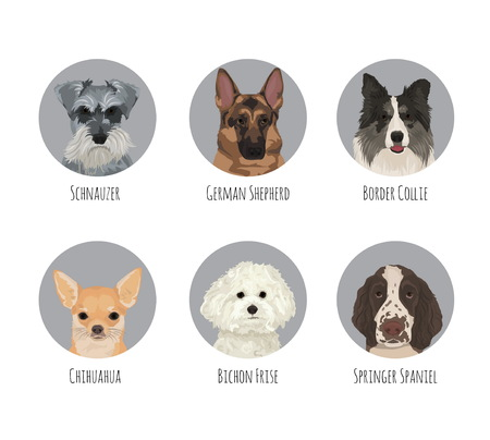 Dog animal pet round circle portrait badge stickers. Various dog breeds and kind, friendly cute german shepherd, border collie, chihuahua, schauzer, bichon frise, springer spaniel