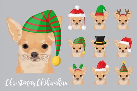 Christmas festive collection of cute chihuahua puppy dogs wearing celebration new year ornament hat and headband.